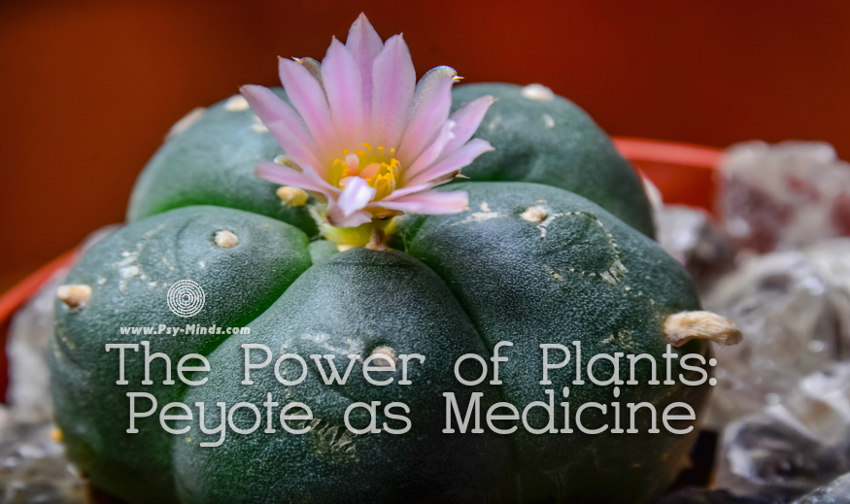 The Power of Plants Peyote as Medicine