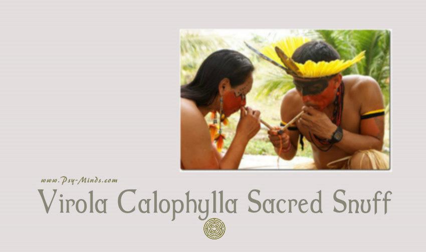 Virola Calophylla Sacred Snuff
