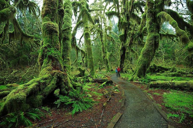 Hoh-Rain-Forest-Washington-USA fairy tale
