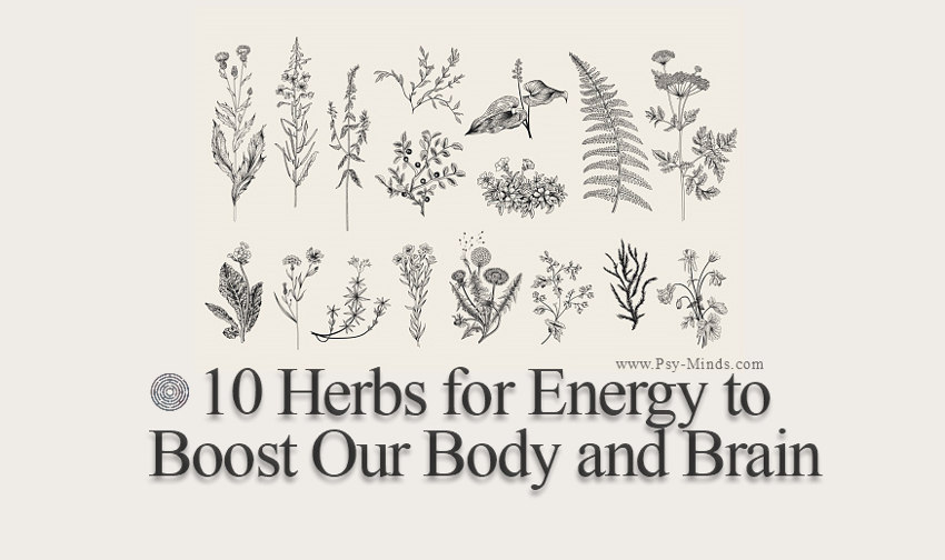 10 Herbs for Energy to Boost Our Body and Brain