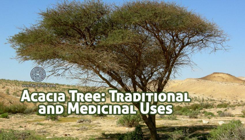 Acacia Tree Traditional Uses and Medicinal Uses