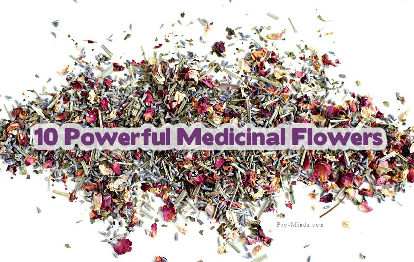 10 Powerful Medicinal Flowers