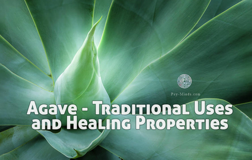 Agave - Traditional Uses and Healing Properties