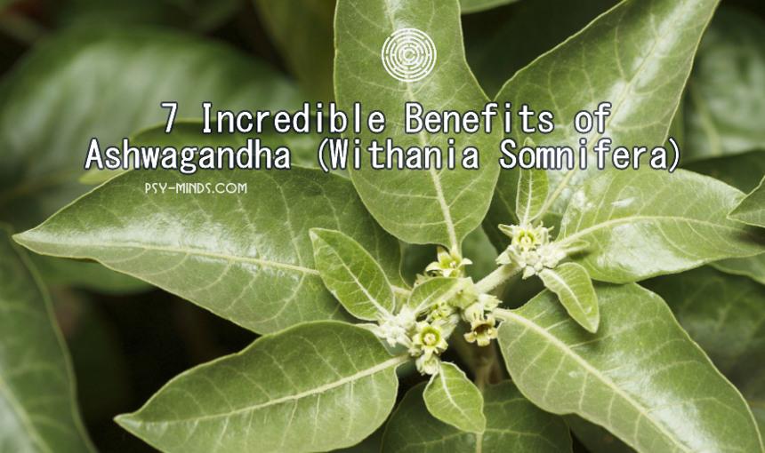 7 Incredible Benefits of Ashwagandha (Withania Somnifera)