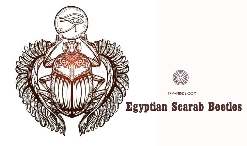 Egyptian Scarab Beetles