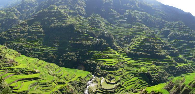 Pana_Banaue_Rice_Terraces_(Cropped)