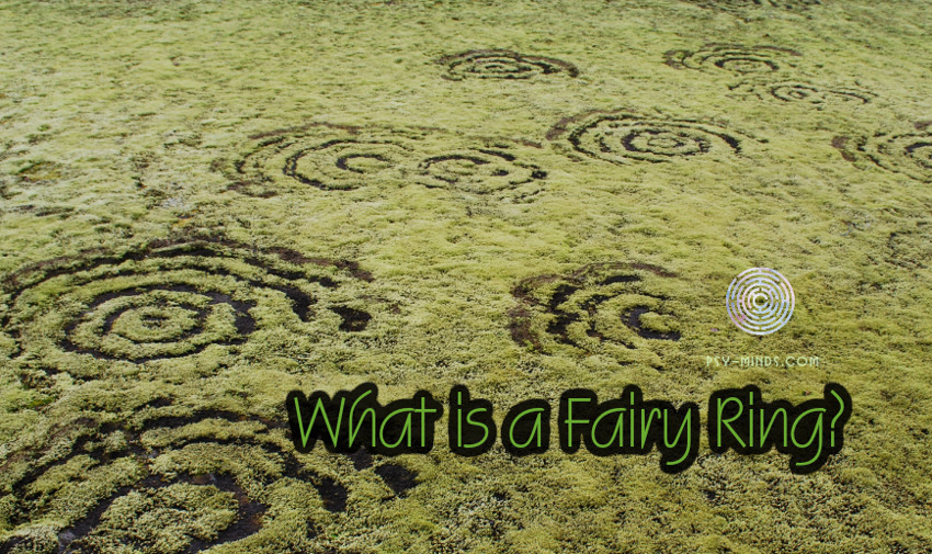 What is a Fairy Ring