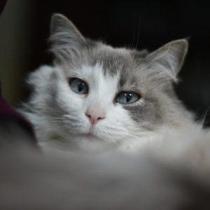 Profile photo of Phoebe