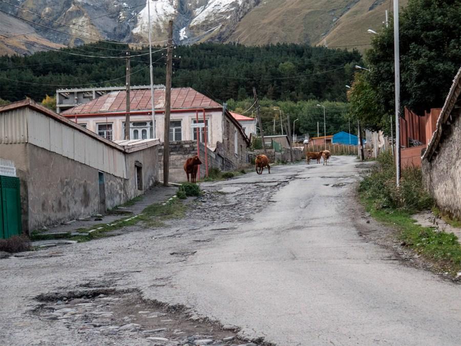 Stepancminda i krowy