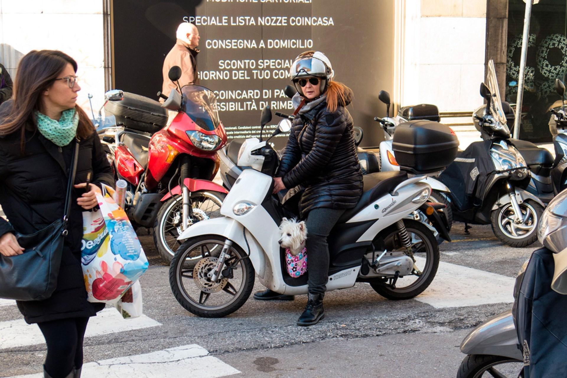 Mały biały piesek jedzie se swoją panią na skuterze :)