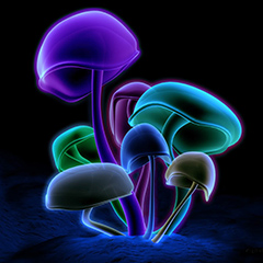 Shrooms for Five: My First Psychedelic Experience