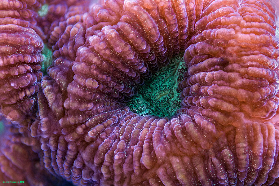 A stacked image of coral surface