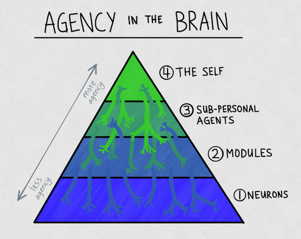 Agency in the Brain