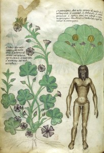 """An old illustration that really puts the """"man"""" in """"mandrake"""""""