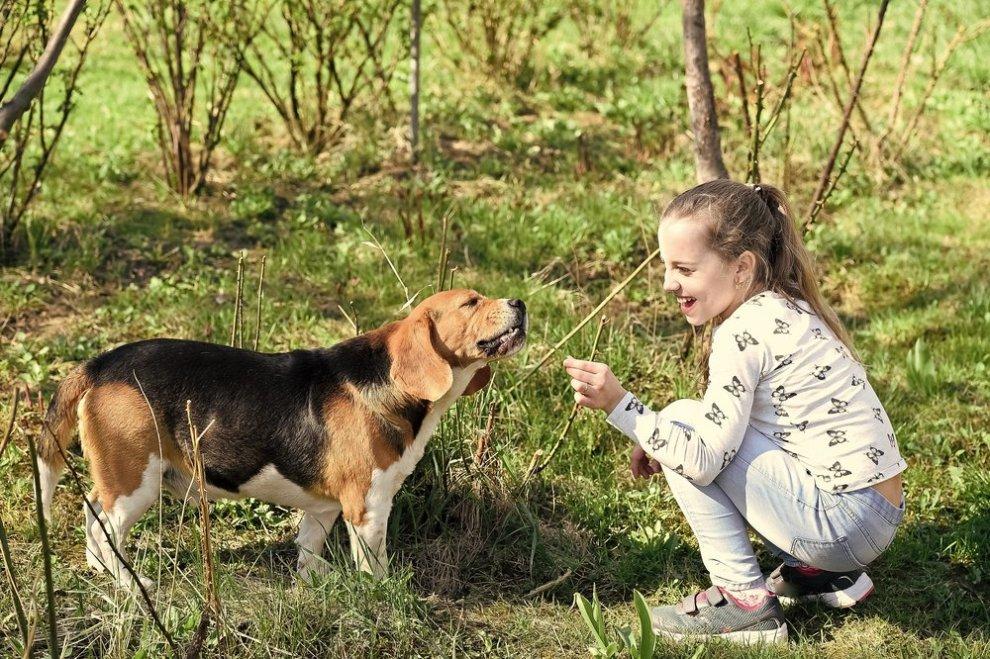 Kind speelt met hond - geen angst