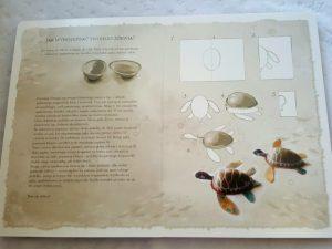 20181014_235247-225x300 Dom Montessori. Podwodna przygoda w książce RAFA koralowa. Nasza Księgarnia 10.2018