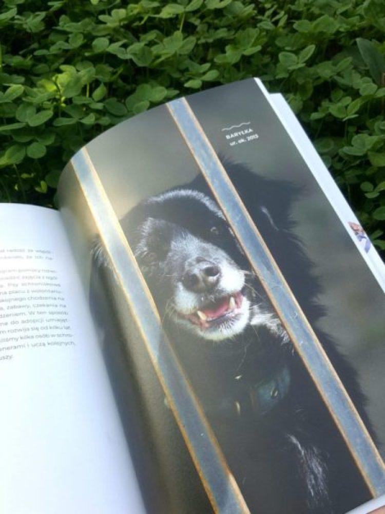 20190916_123849320584650-768x1024 Psychologia zwierząt: Słuchając psa. Zaniewska-Wojtków Zofia, Wojtków Piotr. 2019 Buchmann