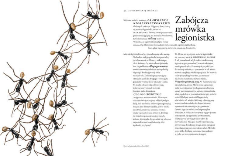 2726_niezwykla_ksiega_owadow Niezwykła księga owadów -Bart Rossel. Ogromne dzieło o życiu tych najmniejszych. Nasza Księgarnia JESIEŃ 2019