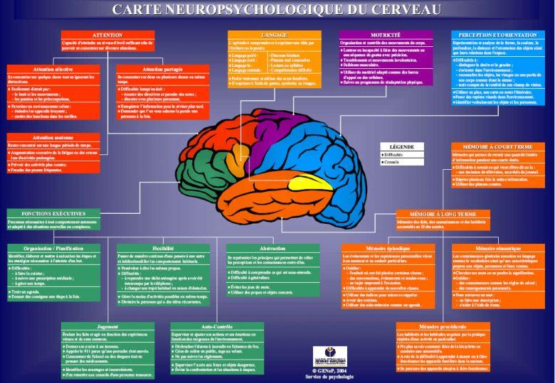 Carte neuropsychologique du cerveau 1