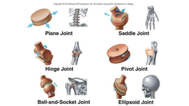 Comment supporter les arthropathies : Les douleurs articulaires 1