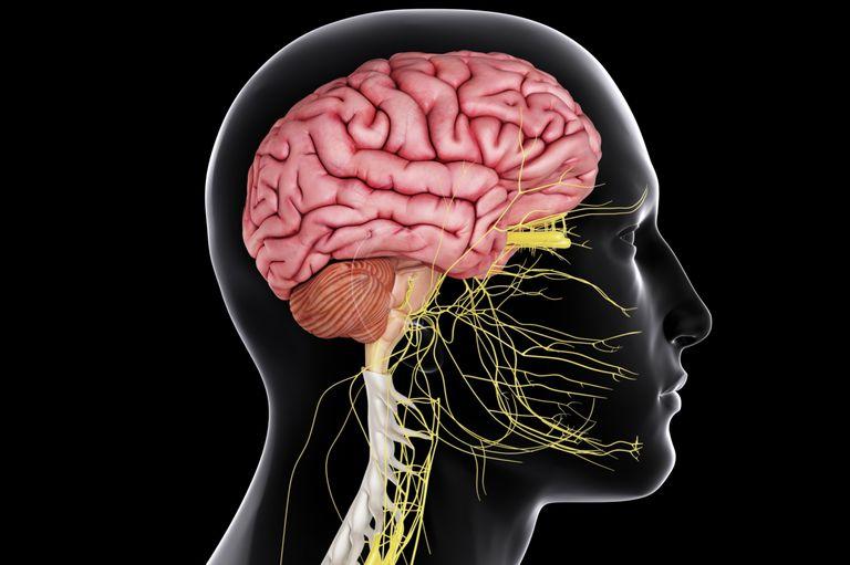 Les effets de l'alcool sur Le système nerveux central 1
