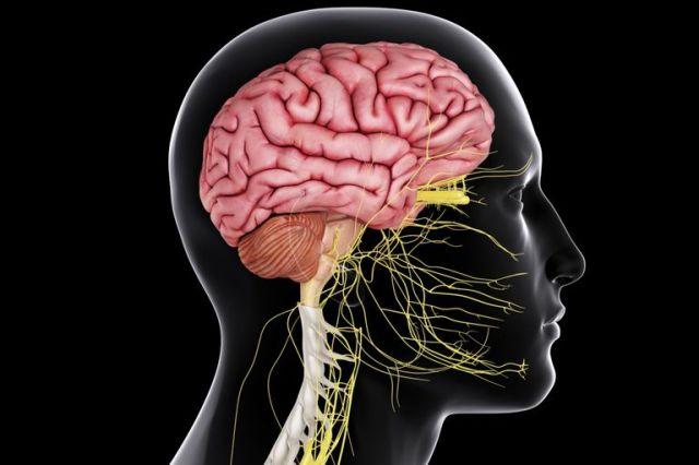 les-effets-de-lalcool-sur-le-systeme-nerveux-central