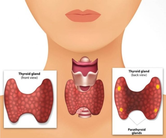 symptomes-thyroides-solutions