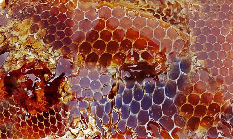 Le miel de manuka : Bienfaits santé et caractéristiques 1