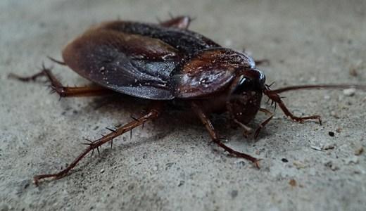 【夢占い】ゴキブリが暗示する重要なメッセージ