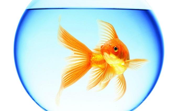 夢占い 魚