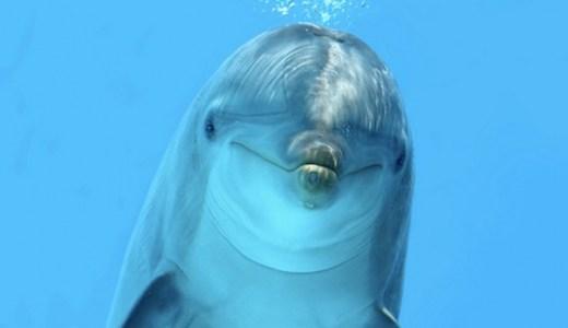 【夢占い】イルカが暗示する重要なシグナル