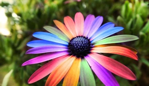 【夢占い】花が暗示する重要なメッセージ