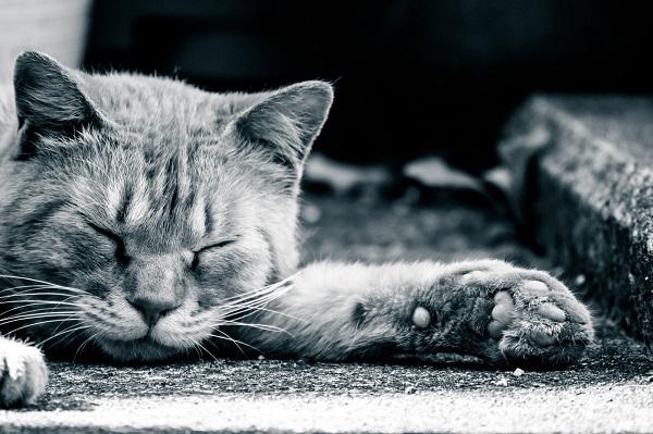 ぐっすり寝る