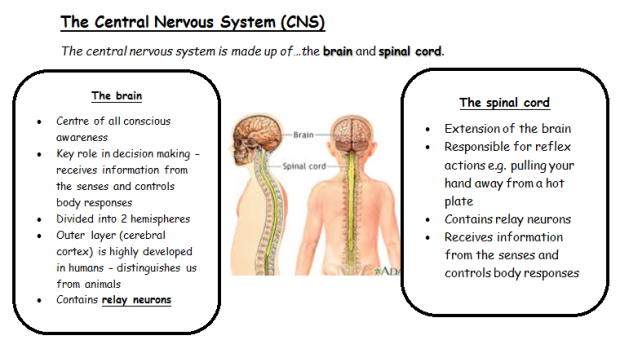 The CNS