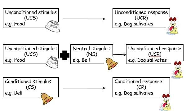 Pavlovs Dogs CC Schedule