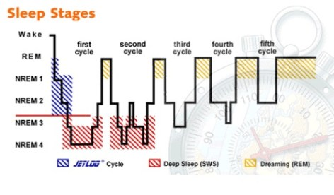 Stages of Sleep Diagram outlining the 90 minute sleep cycle.