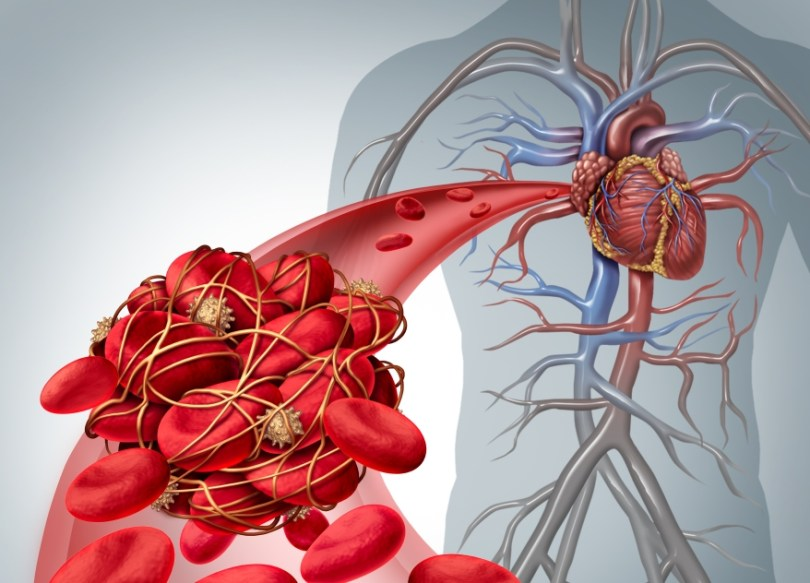 naczynia krwionośne