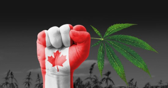 Canada on the way to legalization of cannabis - Sensi Seeds blog