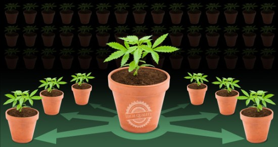 How to set up a high quality clone room - Sensi Seeds blog