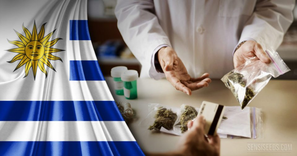Uruguay Carries Out the First Harvest of Legal Recreational Cannabis