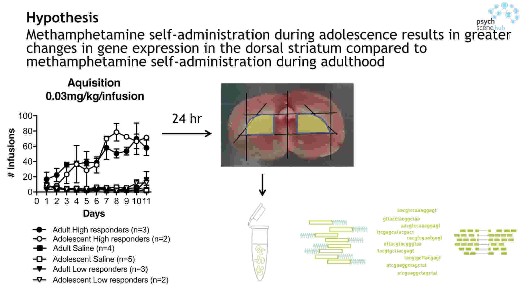Cue Exposure Therapy In Methamphetamine Addiction By A