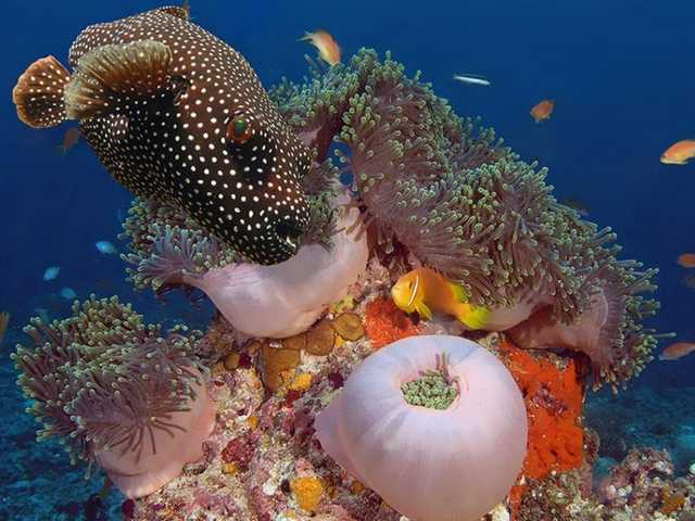 A Vida Nas Águas do Mar Vermelho