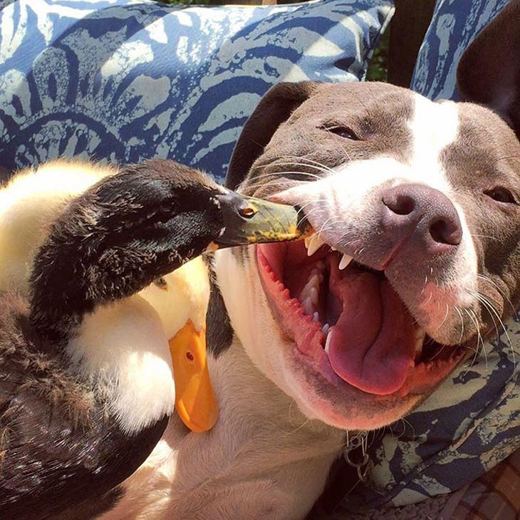 Animais adotados que vivem em harmonia
