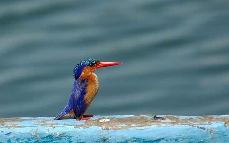 Fotos de exóticos pássaros