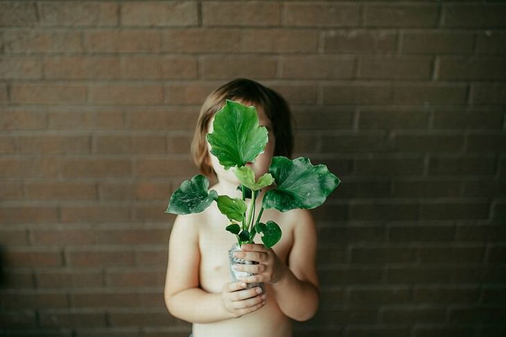 Purifique o Ar da Sua Casa Com Estas Plantas