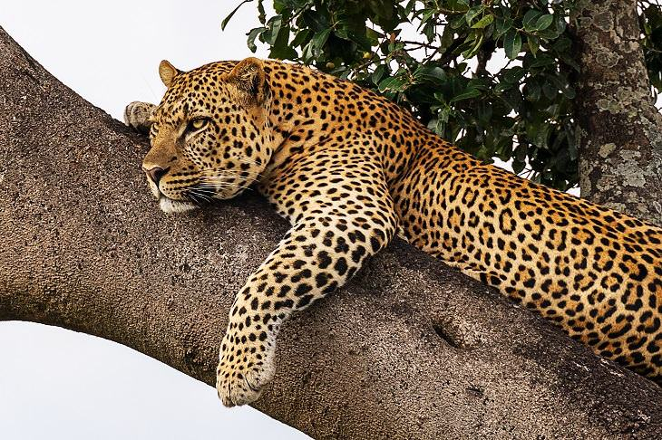 8 melhores locais para apreciar vida selvagem
