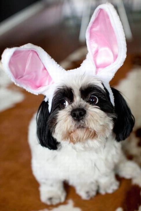Estes Animais Estão Prontos Para Celebrar a Páscoa!