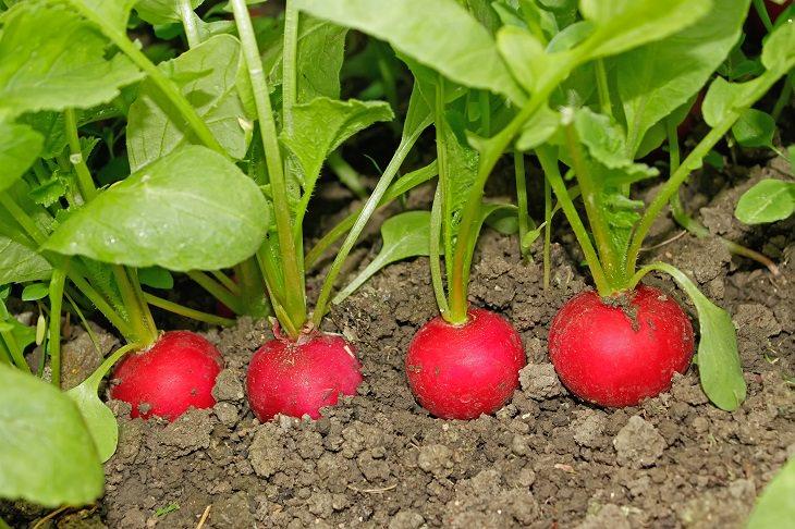 15 dicas para plantar vegetais no jardim