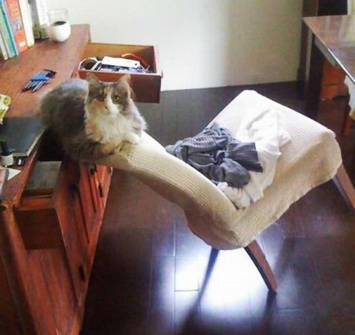 A Misteriosa Lógica dos Gatos