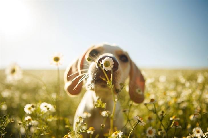 concurso de fotografia canina do kennel club